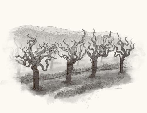 Regusci Old Vine Zinfandel