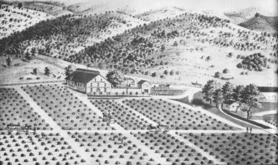 Regusci Historical Sketch of Occidental Vineyards