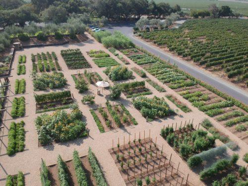 Regusci Culinary Garden